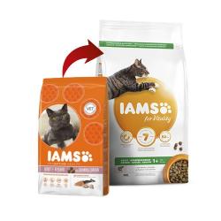 Iams-Adulto Proactive Salmone (1)