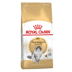 Royal Canin-Norwegian Forest Adulto (1)
