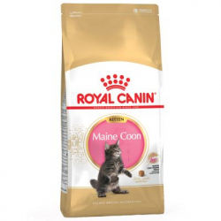 Royal Canin-Kitten Maine Coon (1)