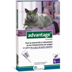 Ecuphar-Advantage 80 Gatto +4kg (1)